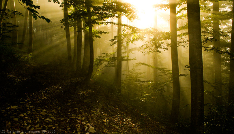 Into the wood 4 by Melanie-E