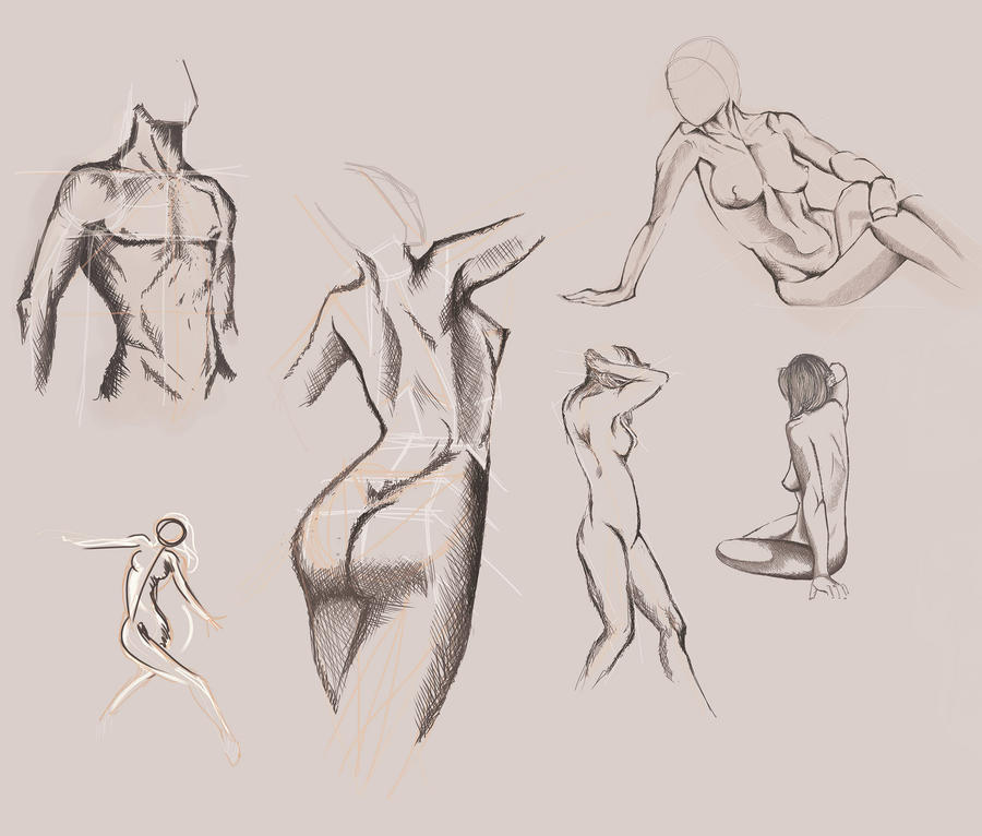 Anatomy Study Sketch By Fraua On Deviantart