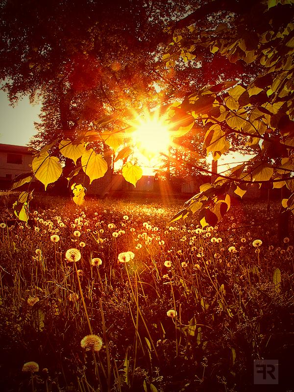 Spring Sunsets by FilipR8