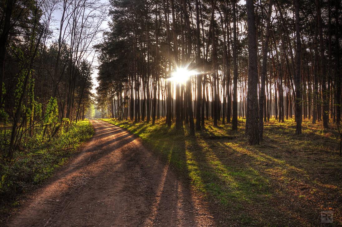 Good Morning Forest I by FilipR8