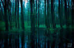 Evening Forest 2