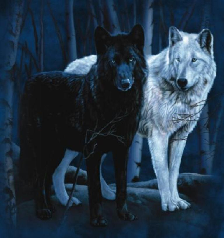 White And Blue Wolf Black And White Timber Wolf by