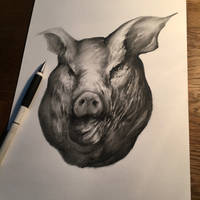 First out 2016, a pig.  by anythingbuthumans