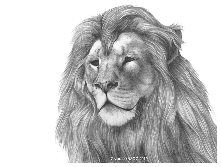 Lion Snarl Drawing