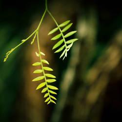 leaf by rami777