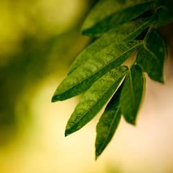 leafy by rami777