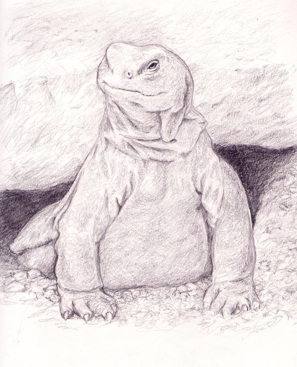 Uromastyx by dashinvaine