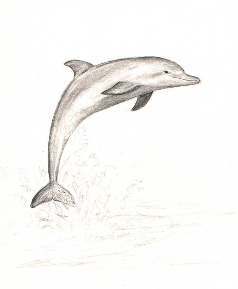 Яндекс днем, рисунки дельфина прикольные