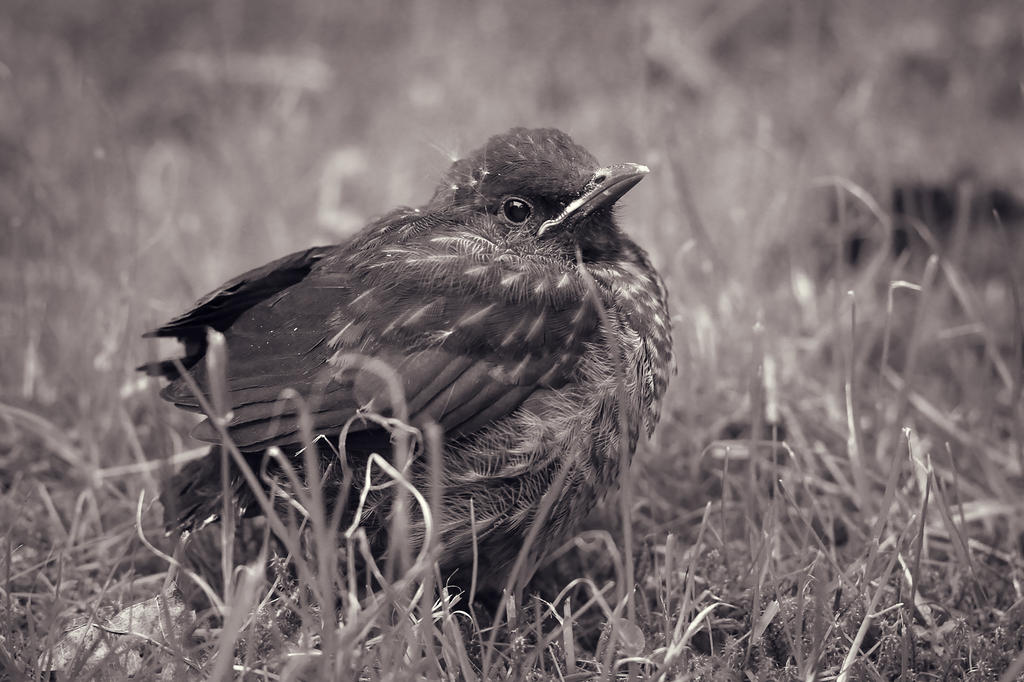 Little Birdy by Des-Henkers-Braut