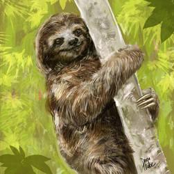 Sloth / Paresseux