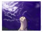Furret Night