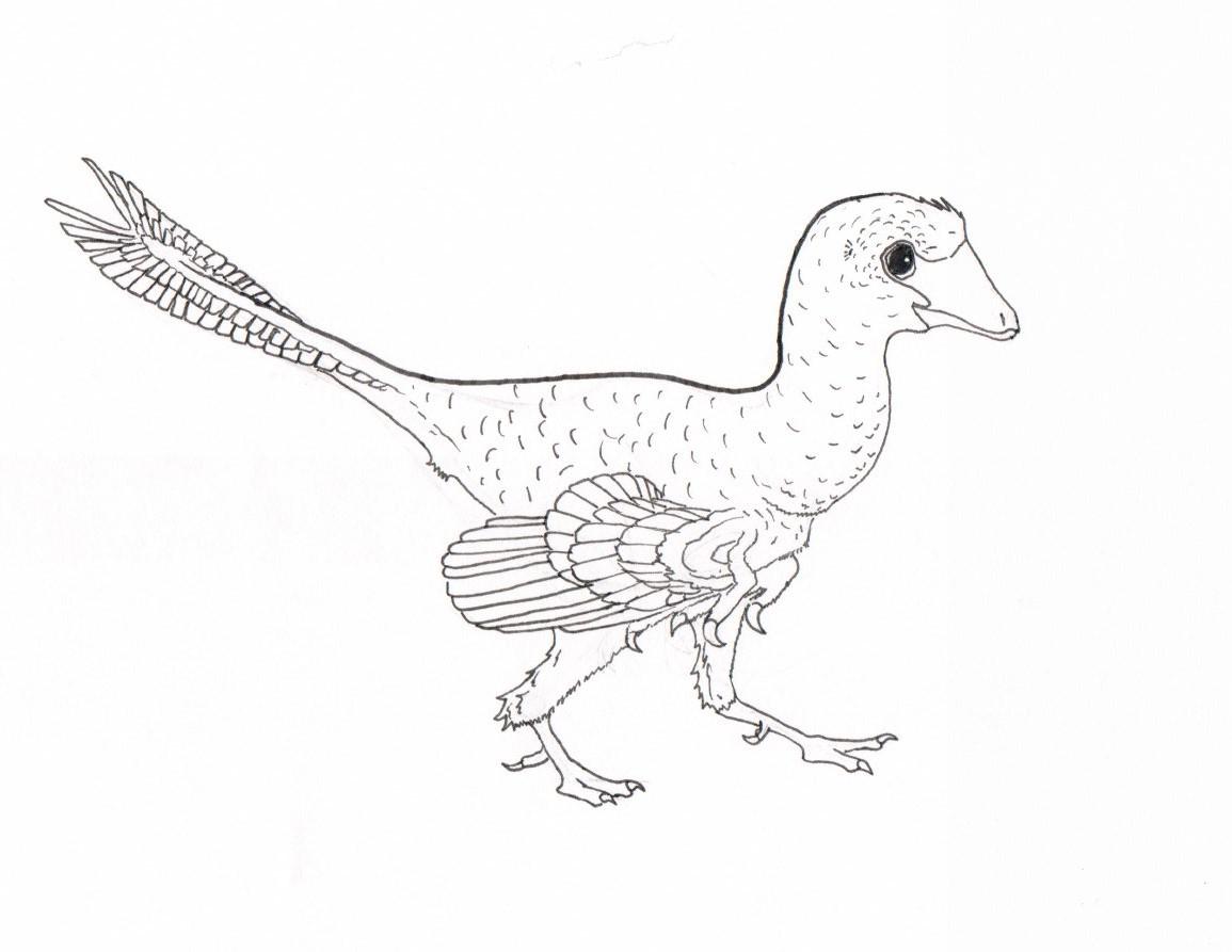 Jinfengopteryx elegans by TheTerritorialTrike