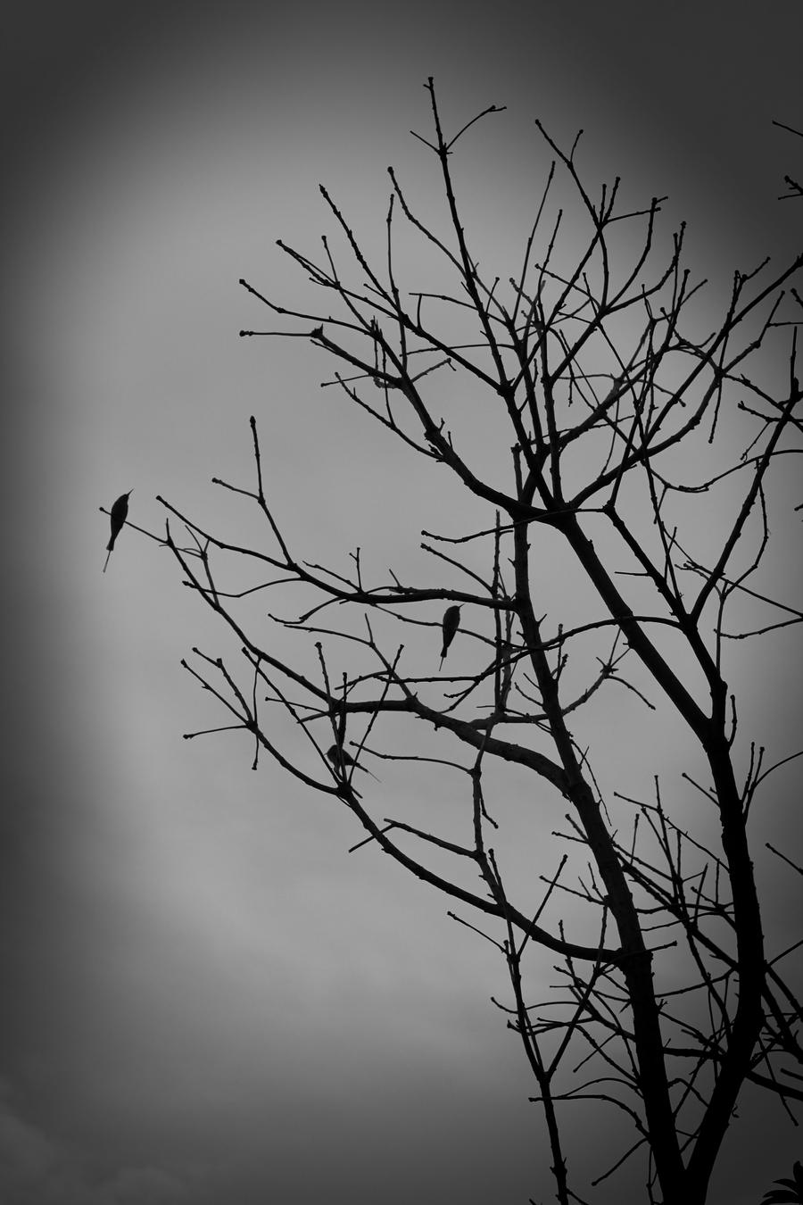 Tree Without Leaves By Fahadee On Deviantart