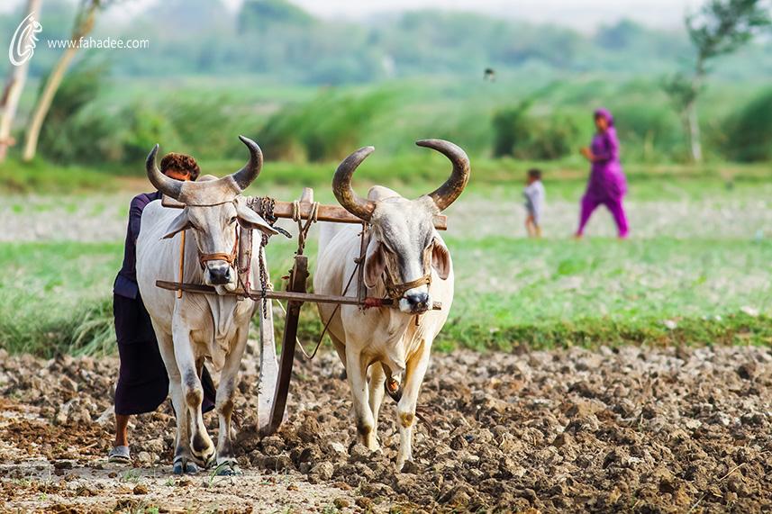 Village Life by fahadee