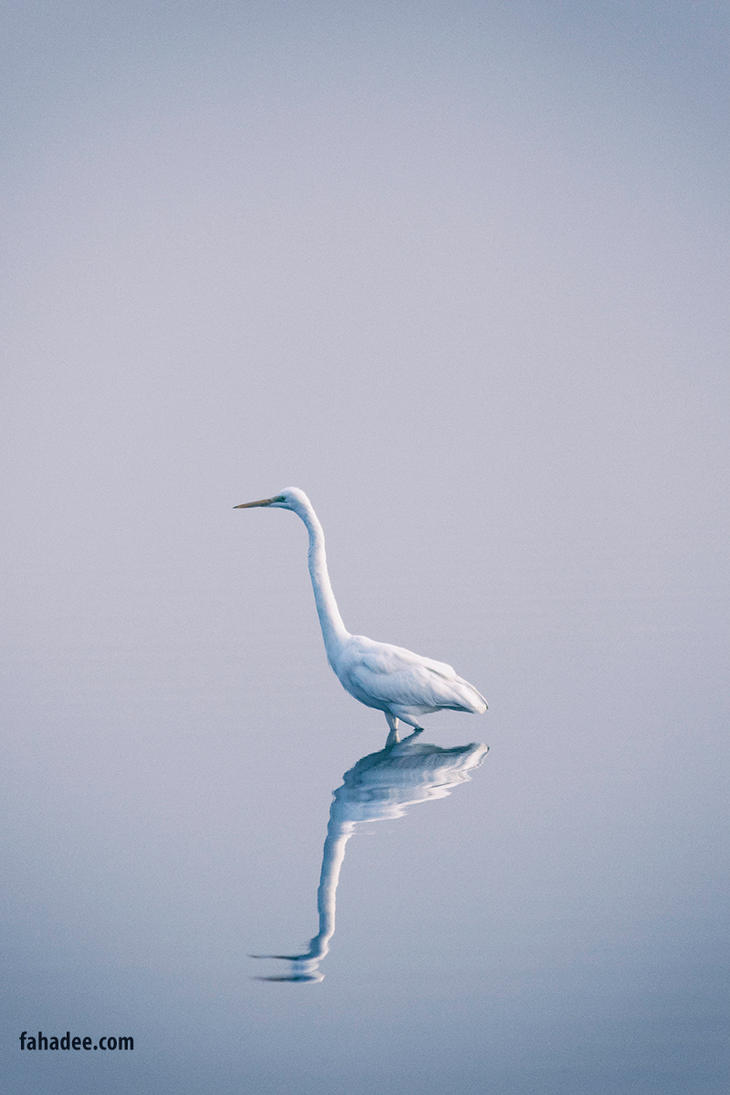 Great egret by fahadee