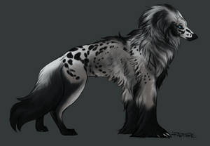 Silky Beardog #20 by markedwolf