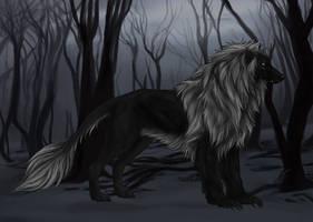 Barbary Silky Beardog For Sale by markedwolf