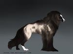 Silky Beardog #91