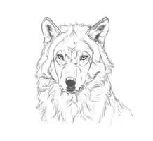 Hera by markedwolf