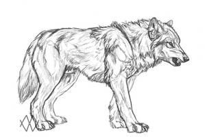 Wolfbeast by markedwolf