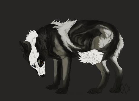 Piebald Wolf - Sold