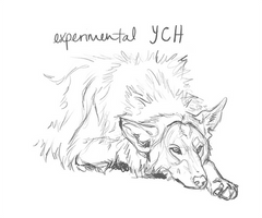 Experimental YCH Sold