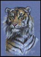 Tiger by MEJ0NY