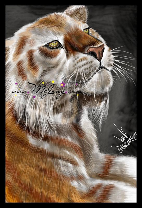 +Tabby Tiger+