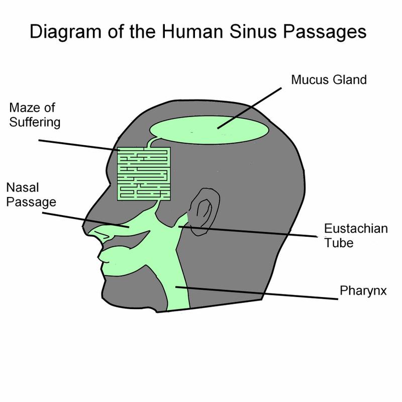Sinus Diagram By Shininginthedarkness On Deviantart