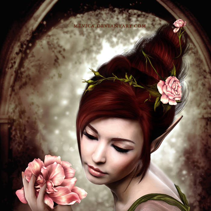 Rose by mevica