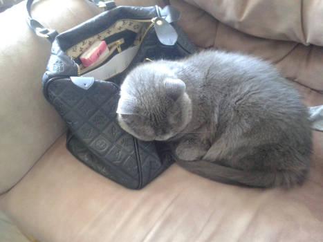 Cats loves handbags