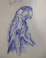 practice ballpoint pen drawing of a parrot