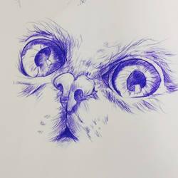 practice ballpoint pen drawing of kitten eyes