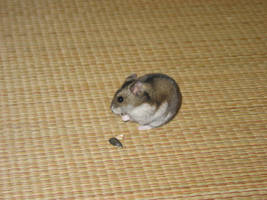 Moi Hamster