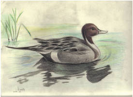 Duck by Unfaithed