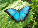 Butterfly by Unfaithed