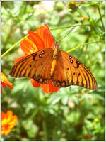 Another Butterfly by Unfaithed