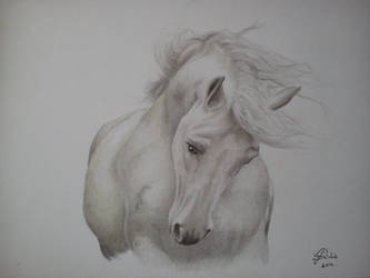 Untitled  horse by vlesslie
