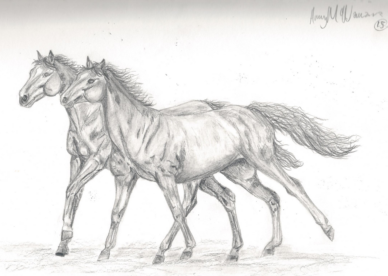 Galloping horse sketches - photo#11