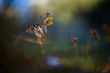 Papilio Demoleus by RGSeby