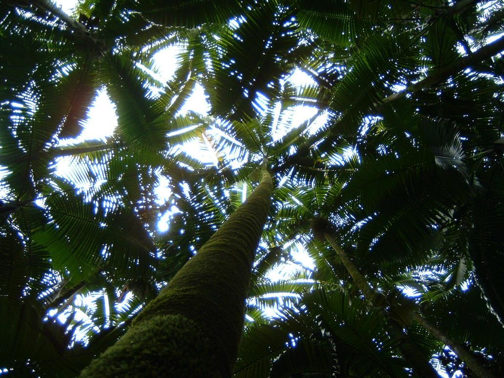 Hawaiian Palm Canopy by hitokirivader ... & Hawaiian Palm Canopy by hitokirivader on DeviantArt