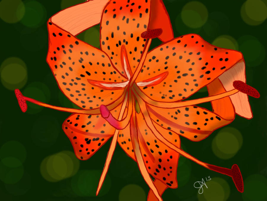 first try at drawing flowers tiger lily by glitter glitter