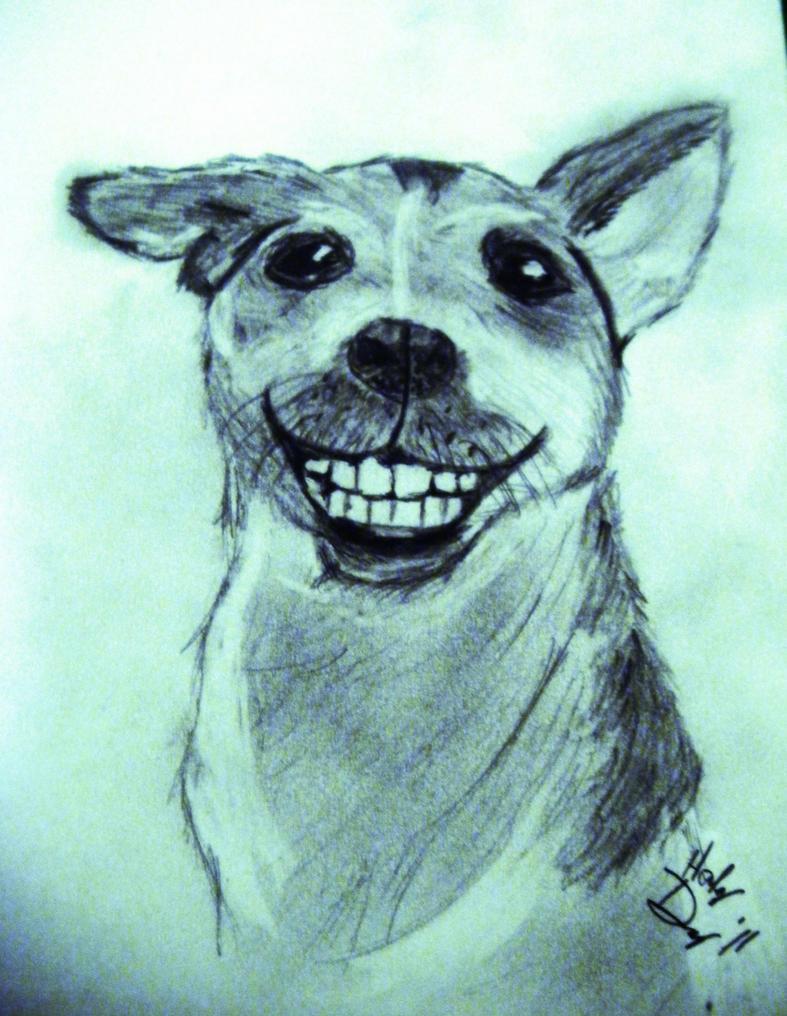 doggie dentures by haleyoftheflame on deviantart