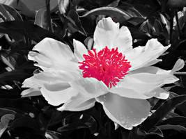 white flower by ironflower86