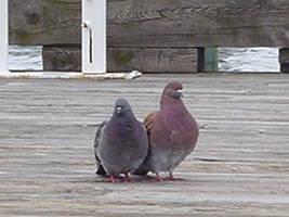 love birds by ironflower86