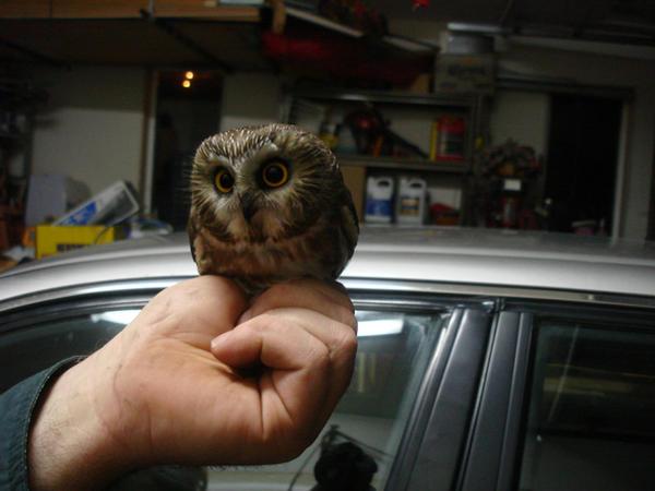 Owl by meekjade