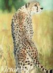 Amber by The-Long-Feline