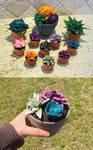 Succulent Experiments