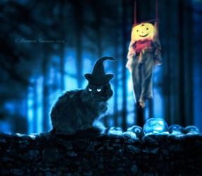 Where's My Pumpkin???