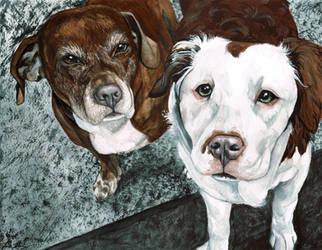 Tegan's Dogs by TinaFuresz